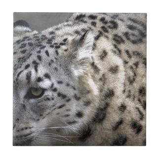 La onza salvaje del gato mancha la naturaleza del azulejos