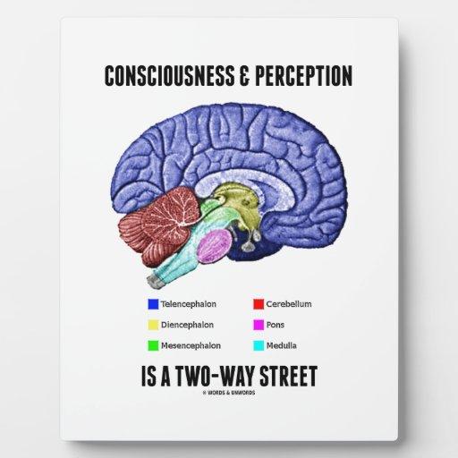 La opinión de la conciencia es un cerebro de la ca placas para mostrar