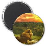 La opinión del león iman