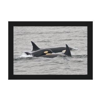 La orca joven (orca) envolvió la impresión de la l lona estirada galerías