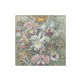 La orquídea amarilla blanca rosada de Haeckel Imán De Piedra