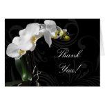 La orquídea blanco y negro dramática le agradece l