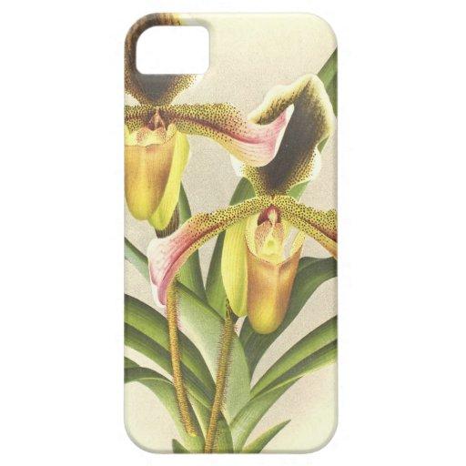 La orquídea botánica florece el vintage floral funda para iPhone SE/5/5s
