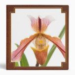 La orquídea - el deslizador cabrá