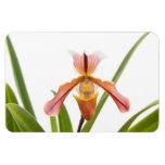 La orquídea - el deslizador cabrá imán de vinilo
