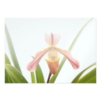 La orquídea - el deslizador cabrá invitación