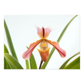 La orquídea - el deslizador cabrá invitaciones personalizada