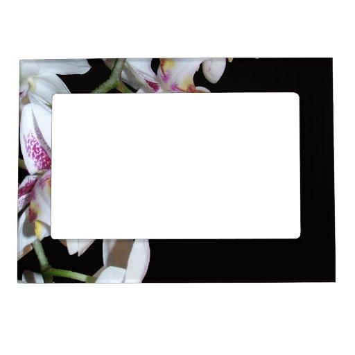 La orquídea florece el marco magnético marcos magnéticos de fotos