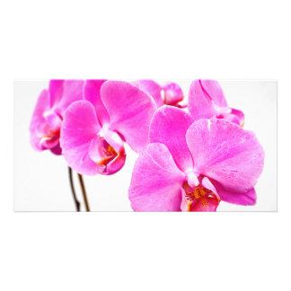 La orquídea florece el primer tarjetas fotograficas