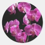 La orquídea florece pegatina