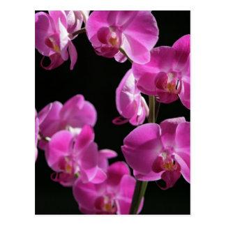 La orquídea florece postal