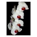 La orquídea florece tarjeta de felicitación