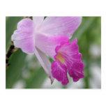 La orquídea mecanografía la postal