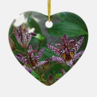 La orquídea rayada blanca rosada púrpura tiene gus adorno para reyes