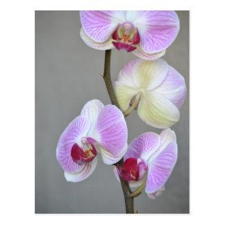 La orquídea rosada florece la postal