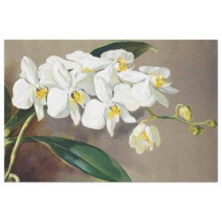La orquídea tropical florece el papel seda floral papel de seda extragrande