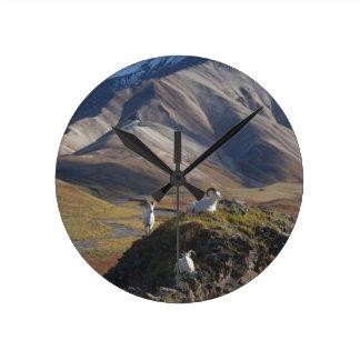 La oveja de Dall pega la perca en un acantilado Reloj Redondo Mediano