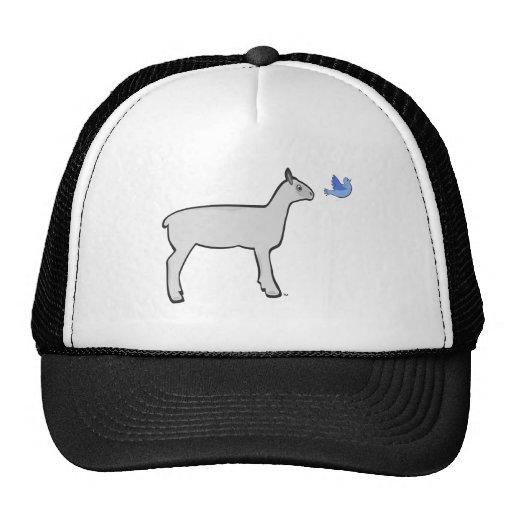 La oveja sigue el gorra
