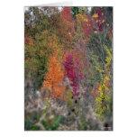 La paleta del otoño tarjetón