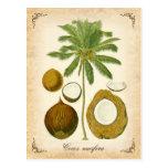 La palma de coco - ejemplo del vintage tarjeta postal