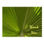 La palma tropical le agradece postales