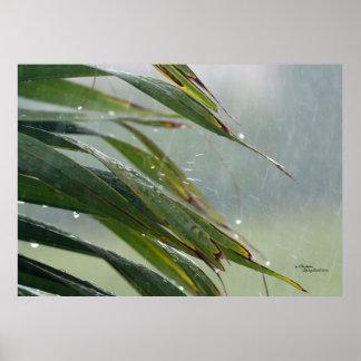 La palmera sale del poster de las gotas de agua