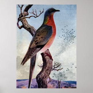 La paloma de pasajero póster