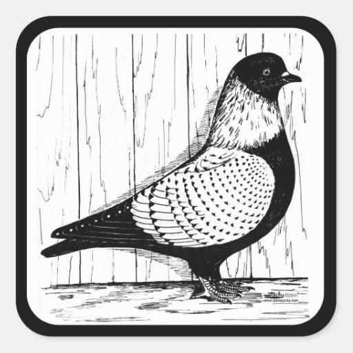 La paloma de Starling Plata-ató 1979 Pegatina Cuadrada