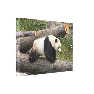 La panda refiere un registro lienzo envuelto para galerías