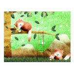 La panda roja vino preparado… postales