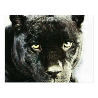 La pantera negra de Jaguar observa la postal