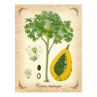 La papaya - ejemplo del vintage postales