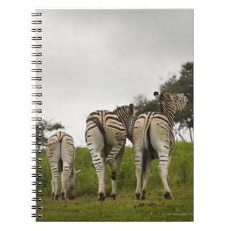 La parte trasera de tres cebras, Suráfrica Cuadernos