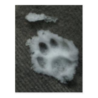 La pata del gato congelado postales