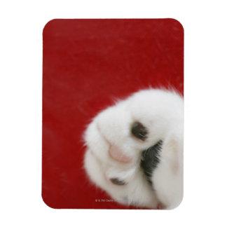 La pata del gato imanes de vinilo