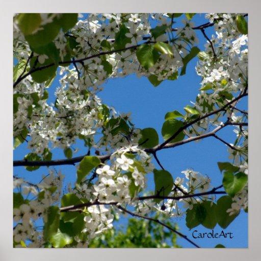 """La """"pera florece poster del arte del cielo azul"""""""