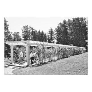 La pérgola del jardín de Yaddo Impresiones Fotográficas