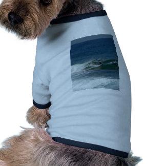 La persona que practica surf encendido ve ropa de mascota
