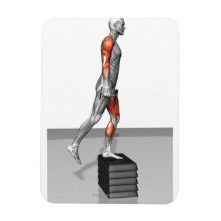 La pesa de gimnasia intensifica 4 iman flexible