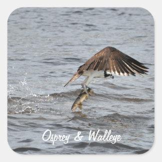 La pesca Osprey y coge la foto de la fauna 3 Pegatina Cuadrada
