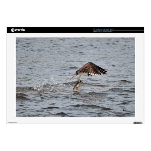 La pesca Osprey y coge la foto de la fauna 3 Calcomanías Para Portátiles