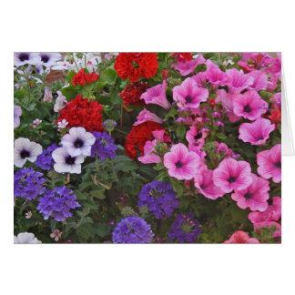 la petunia florece la tarjeta de regalo