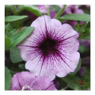 """La petunia planta el poster invitación 5.25"""" x 5.25"""""""