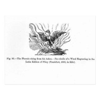 La Phoenix que sube de sus cenizas Postales