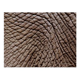 La piel del elefante africano (africana del postal