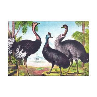 La pintura del vintage de la avestruz impresiones de lienzo