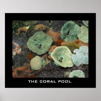 La piscina coralina posters