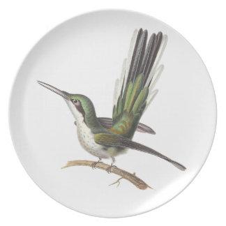 La placa del colibrí del amante verde hermoso del  plato