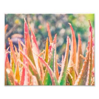 La planta colorida del agavo inclina la impresión fotografía
