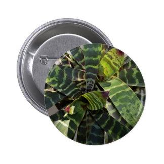 La planta de Bromeliad raya las hojas Pins